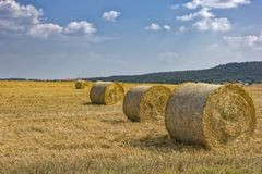Hay bales. On the field after harvest stock photos