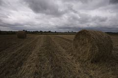 Hay bales on the field after harvest Stock Image