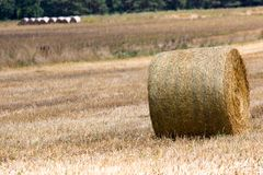Hay bales on the field after harvest, Poland Royalty Free Stock Photos