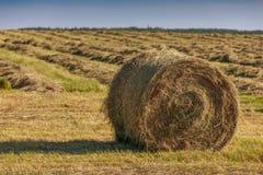 Hay Bales Stock Photos