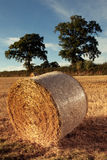 Hay bales on the field after harvest Royalty Free Stock Image