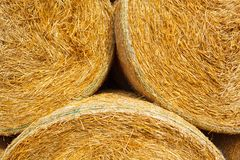 Hay bales on the field after harvest Stock Photo