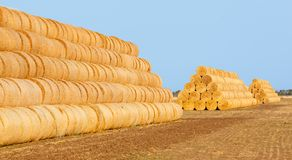 Hay bales on the field after harvest Stock Images