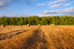 Hay bales on the field after harvesting illuminated by the last rays of setting sun. royalty free stock photography