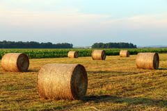 Hay Bales in the Field royalty free stock image