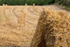 Hay bales in a field Stock Image