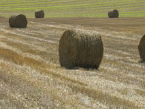 Hay bales in a field Royalty Free Stock Image