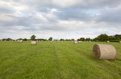 Hay Bales in Field Stock Photography