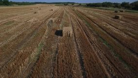 Hay bales on field , seno. Drone aerial footage stock footage