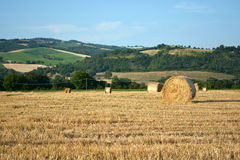 Hay bales on field in late summer. Several big hay rolls on a large field in the Marche area of Italy in late summer royalty free stock image