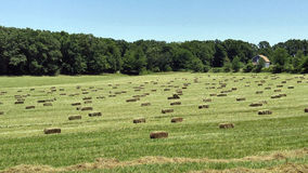 Hay bales in field Royalty Free Stock Photo