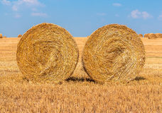 Hay bales on the field. Straw bales on the field Stock Photography