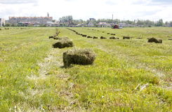 Hay in bales on the field. Hay bales on stubble field in the suburbs Royalty Free Stock Photography