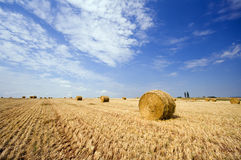 Hay bales on a field in summer Stock Images