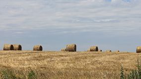 Hay Bale. Hay in Bales at Field in Summer Stock Images