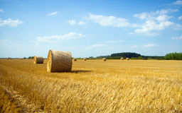 Hay bales on the field Royalty Free Stock Photography