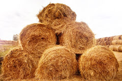 Hay bales on the field at summer Stock Photos