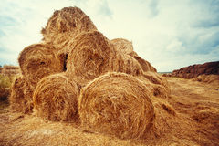 Hay bales on the field at summer Royalty Free Stock Image