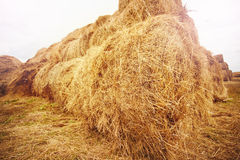 Hay bales on the field at summer Royalty Free Stock Photos