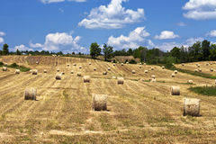 Hay bales in field on a sunny day stock images