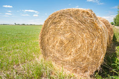 Hay bales. Stock Photos