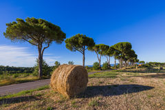 Hay Bales on a field in the Tuscany Italy Stock Photos