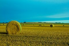 Hay bales in a field under a blue sky. Rolled round bales, Rockyford County, Alberta, Canada Royalty Free Stock Image
