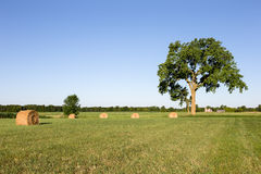Hay Bales in Field Under a Large Tree Royalty Free Stock Photo