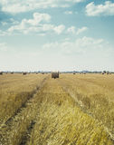 Hay bales in the field in vintage retro effect. Royalty Free Stock Image