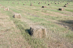 Hay bales in the field Stock Image