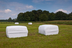 Hay bales in the field waiting for transport. Packages grass in a Dutch field waiting for transport Stock Photos