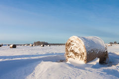 Hay bales on the field Royalty Free Stock Image