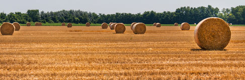Hay bales in the fields. Countryside in Po valley royalty free stock photography