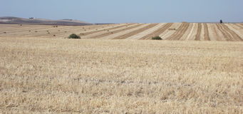 Hay Bales in Fields, Jerez, Cadiz Province, Spain Royalty Free Stock Photography