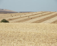 Hay Bales in Fields, Jerez, Cadiz Province, Spain. Harvest time in Jerez showing stripey fields royalty free stock photography
