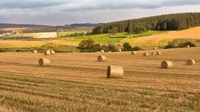 Hay bales in the fields. Speyside Scotland. Gloomy grey skies so typical of Scotland, are contrasted by the sunlight on the near fields stock photo