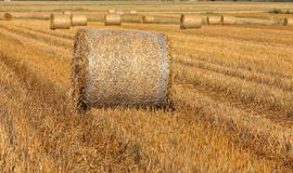 Hay bales on filed. After harvest, first in focus royalty free stock photography