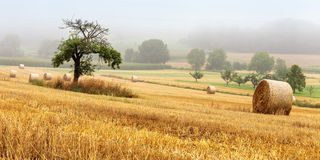 Hay Bales on a foggy morning Stock Photo