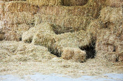 Hay Bales - Food for Herbivores Royalty Free Stock Photo
