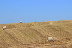 Hay Bales. Fresh round bales of hay in the field stock photo