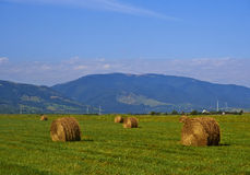 Hay Bales. Freshly cut and rolled Hay Bales lay on a field Royalty Free Stock Photo
