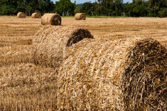 Hay bales on freshly harvested fields Royalty Free Stock Photography