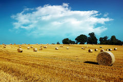 Hay bales in golden field Stock Photography