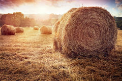 Hay bales in golden field at sunset. Hay bales harvesting in golden field at sunset Stock Photo