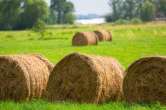 Hay bales on the grass field Royalty Free Stock Image