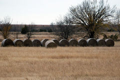 Hay bales in grass meadow Royalty Free Stock Images