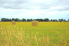 Hay bales in green field Royalty Free Stock Image