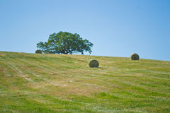 Hay bales in a green field Royalty Free Stock Image