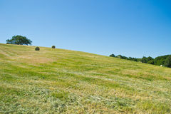 Hay bales in a green field Stock Photo