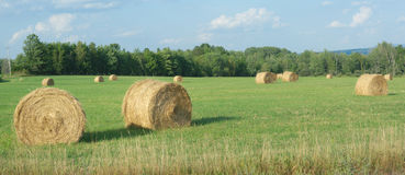 Hay bales in a green field country scene Stock Photo